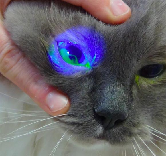 Animal Eye Care